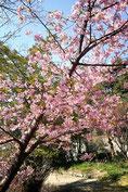 seaさん:千葉県市川市大野・礼林寺