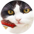 Fell scheren und Knoten entfernen bei Katzen und Kleintieren gehört ebenfalls zu meinem Angebot