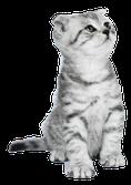Kolloidales Silber für Katzen