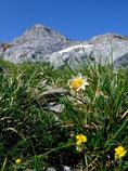 Floraison d'été et Pic d'Anie