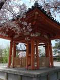 貼るの京都