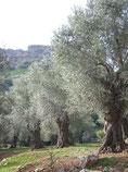 Nimrod's fortress, Israel