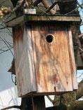 Holzkasten für Blaumeise