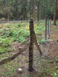 Im Schutze dieses Zaunes werden bald junge Eichen heranwachsen.