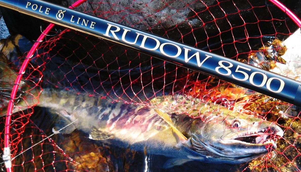 75cm、3.5kgの雄のサケ。サケ釣り用本流竿RUDOW8500による釣果
