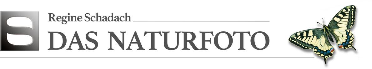 das Naturfoto Logo Titel