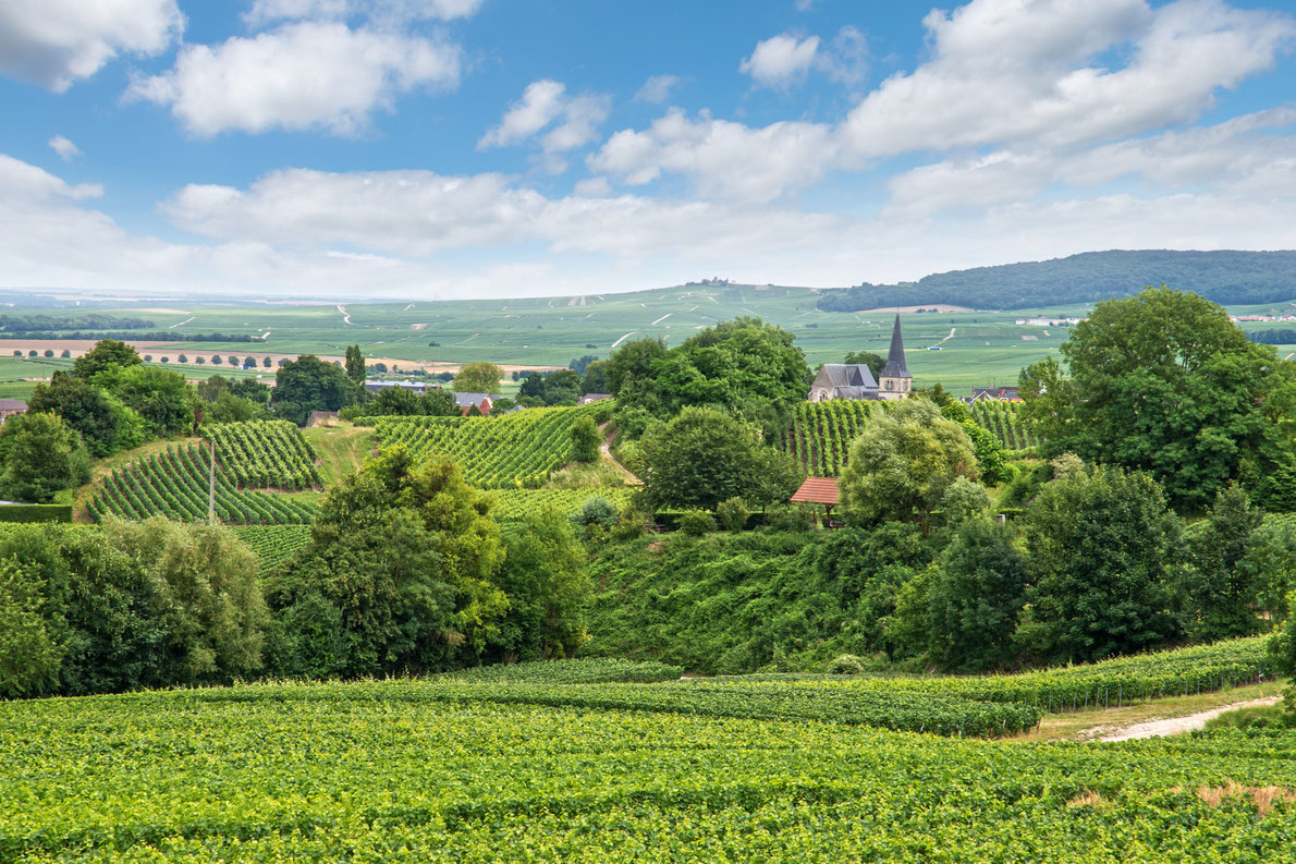 Champagne vineyard France - Best wine destinations in Europe
