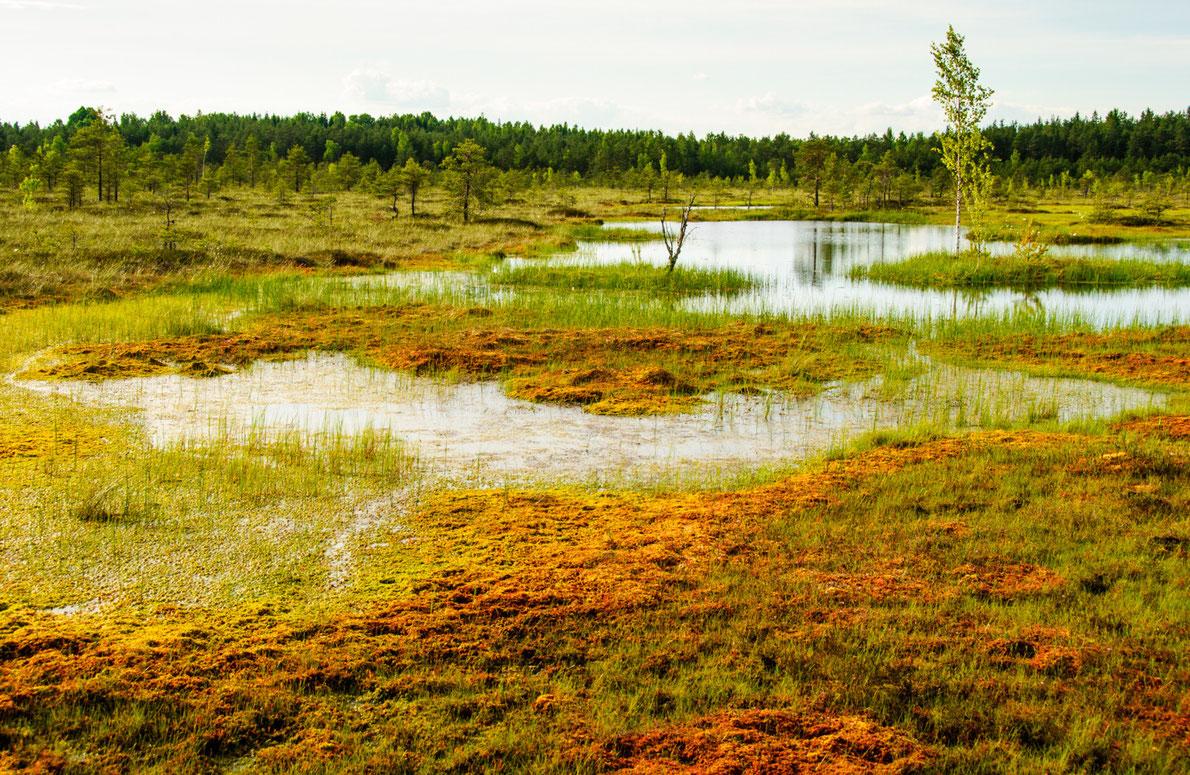 Best National Parks in Europe Soomaa National Park - Copyright kawhia - European Best Destinations