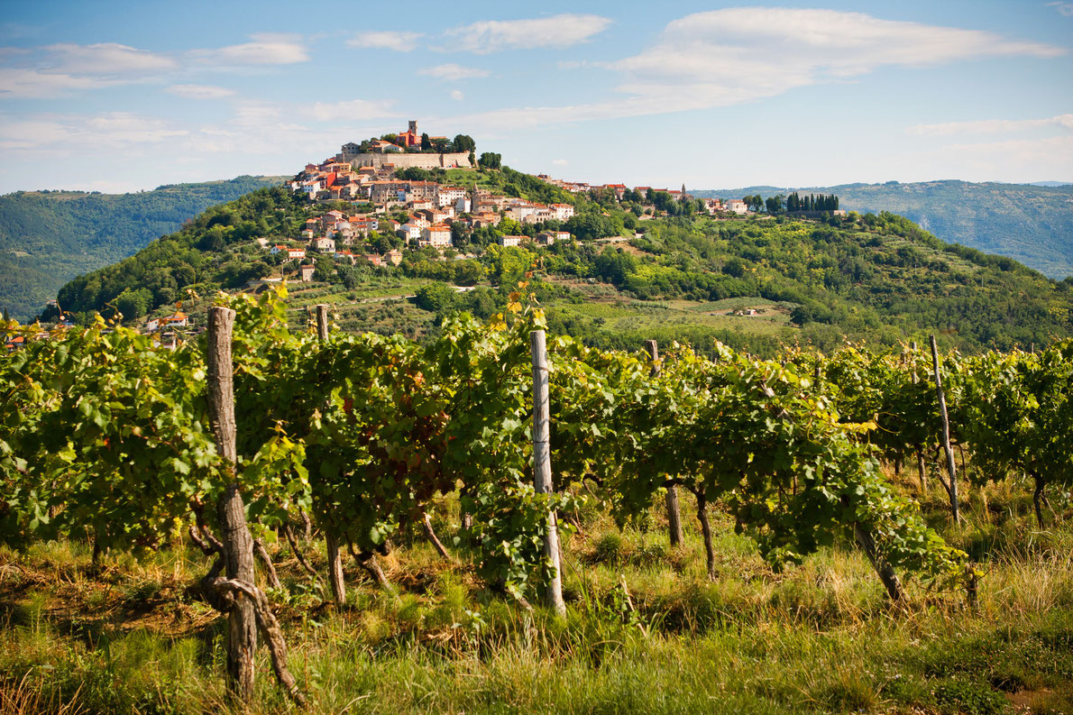 Motovun vineyard in Istria - Best wine destinations in Europe
