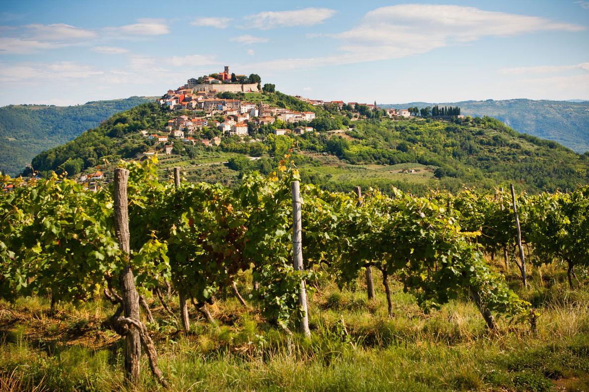 Motovun vineyard in Istria - Best wine destinations in Europe