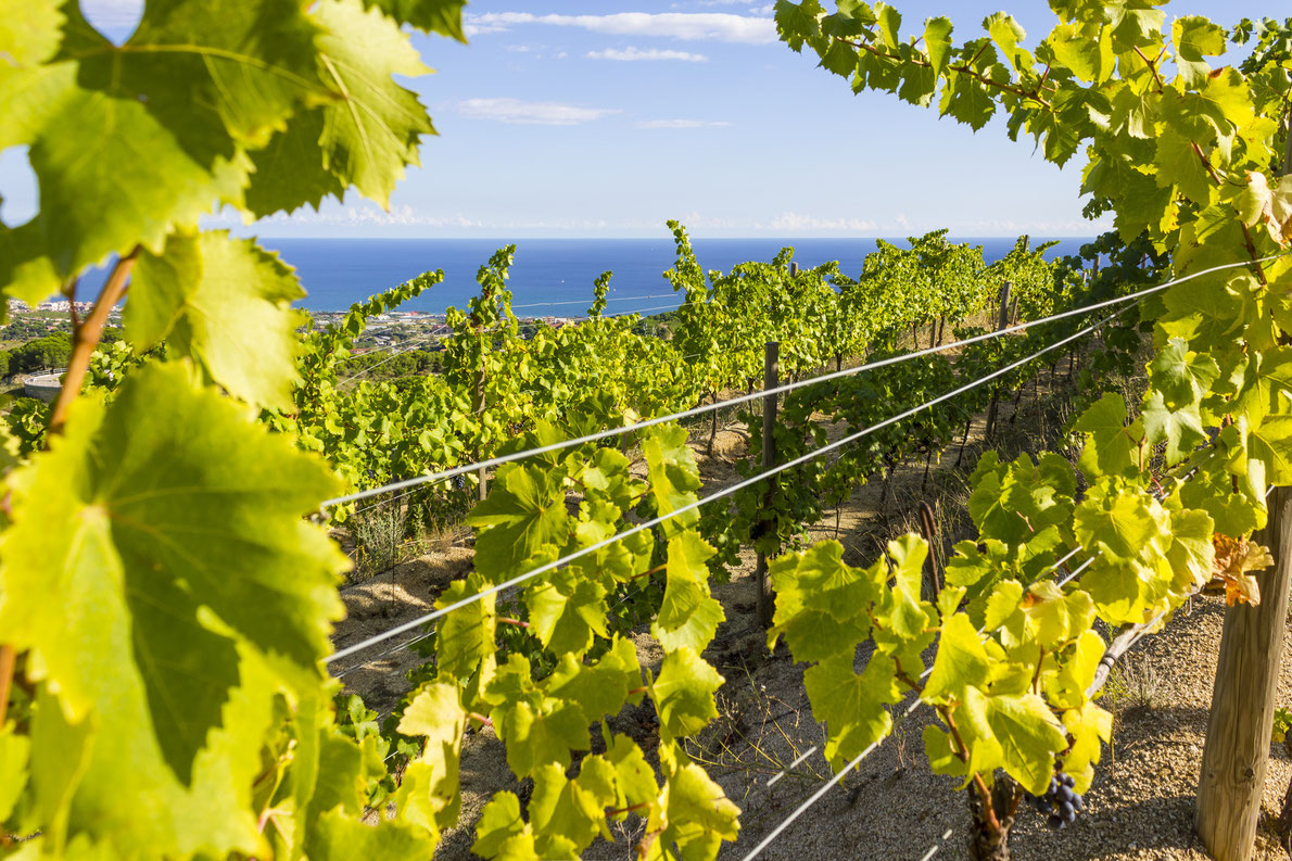Catalonia vineyard Spain - Best wine destinations in Europe