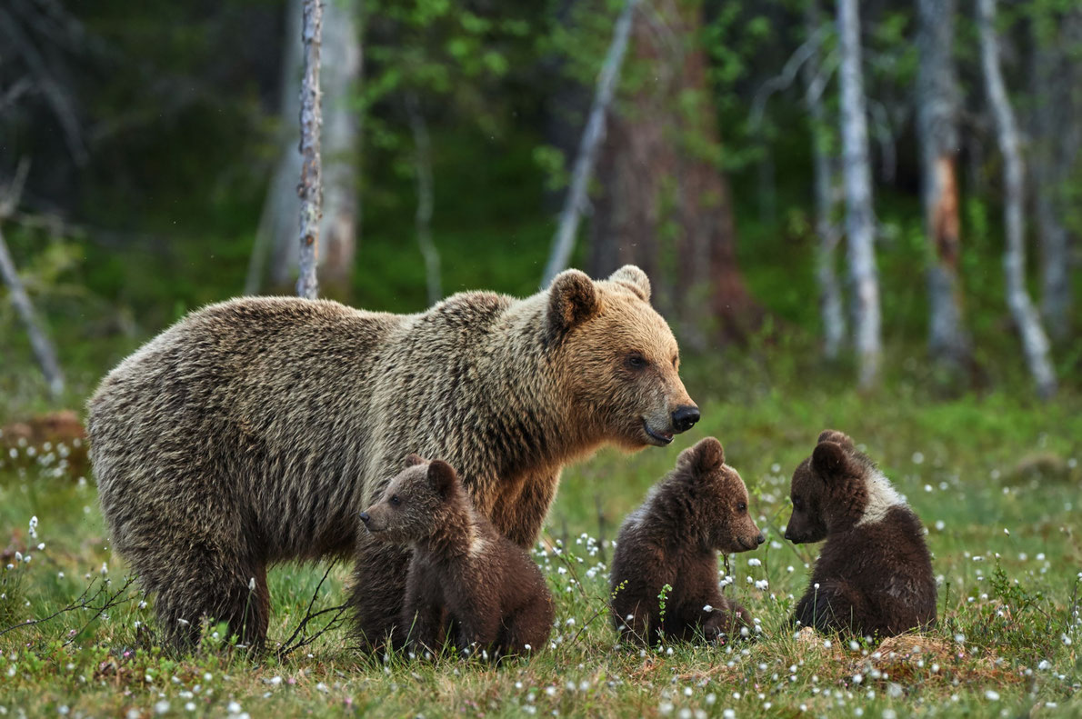 Best national parks in Europe - Wild Taiga - Copyright ArCaLu - European Best Destinations