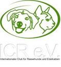 Die Biewer-Yorkshire-Zucht in Bayern, nahe Augsburg ist Mitglied beim ICR e.V.