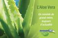 La composition et les avantages de l'aloe vera linné barbadensis miller