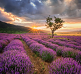 Aromatherapie lernen