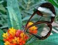 Vivez votre propre chrysalide... /Live your own chrysalis...