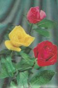Geduld, die Zeit kann Rosen bringen, wo jetzt auch noch die Dornen stehn