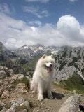 Jerry on the Top of the great slovenian mountains