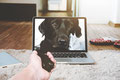 Online Consultation for Dog's Behavior Problems