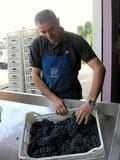 handverlesene Rotweintrauben