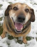 Nerica- hat gut Lachen! Denn sie hat ein tolles Zuhause mit Hundekumpel!