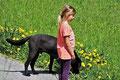 un chien noir se proméne avec une petite fille par coach canin 16 dresseur chien à cognac