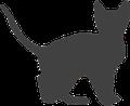 Informationen für Tierbesitzer von Reptilien vom Tierarzt (Bartagamen, Geckos, Schildkröten, Schlangen, Chamäleons, Wasserschildkröte, Landschildkröte)