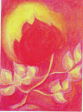 Rose,  als Sinnbild der Liebe