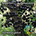 Herbstangebot 2014 Praxiskooperation Memmingen - Hölldorfer und Brutscher