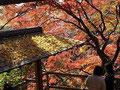 等々力渓谷の紅葉