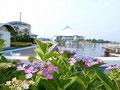 八景島のあじさい