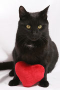 Herzerkrankung Katze