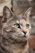 die ältere Katze