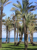 Strand Torremolinos