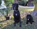 Gaspard und Buddy