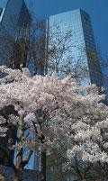 Deutsche Bank Frankfurt im Frühling