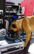 Sprengstoffspürhunde im Einsatz.