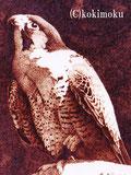 2004年入選作品 ハヤブサ