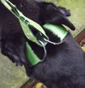 Fitting a martingale collar