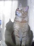 Katinėlis Ryžius