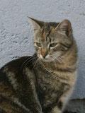 Katze Mascha von Reittherapie Esther Linder-Müller