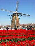 オランダの移転価格税制