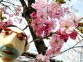 世界に一本だけの桜・森小町、動画で見てみましょう!