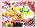 五稜郭公園お花見ジンギスカン2012