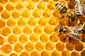 Même les allergiques au miel, peuvent consommer le Gel à boire au miel, car l'Aloé vera combat naturellement toutes les allergies et l'adjonction de miel va créer de nouvelles molécules