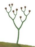 Bild einer Cooksonia
