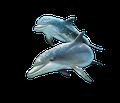 Дельфины и необычные факты