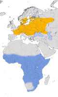 Karte zur Verbreitung der Wiesenschafstelze (Motacilla flava flava) weltweit.