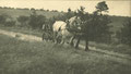 Haymaking in Bartley Green 1905. Thanks to King Edward VI Five Ways School Local History Digital Archive with whose kind permission this image is reproduced. All Rights Reserved. See Acknowledgments for a direct link to the site.