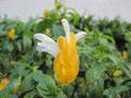 名前が分からないけどキレイな花。